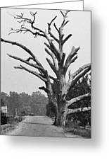 Chiseled Tree In Highway Greeting Card by Sumit Mehndiratta