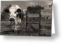 Chocolate Chip At The Stables Greeting Card by T Brian Jones