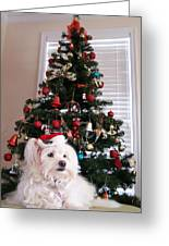 Christmas Card Dog Greeting Card by Vijay Sharon Govender