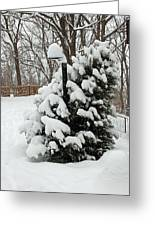 Christmas Tree Greeting Card by Aimee L Maher Photography and Art