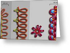 Chromatin Condensation, Diagram Greeting Card by Art For Science