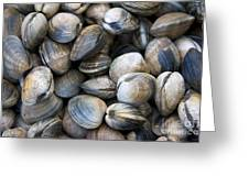 Clam Shell Background Greeting Card by Jane Rix