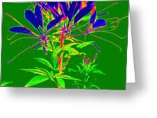 Cleome gone abstract Greeting Card by Kim Galluzzo Wozniak