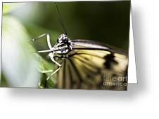 Close Up Greeting Card by Leslie Leda