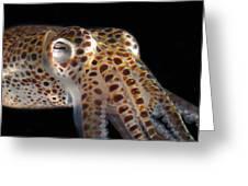 Close Up Of A Dwarf Cuttlefish, Sepiola Greeting Card by Darlyne A. Murawski