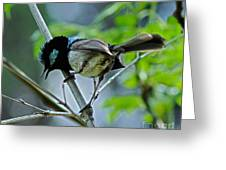 close up of Superb Fairy-wren Greeting Card by Joanne Kocwin