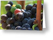 Close Up Of Wine Grapes Greeting Card by Dina Calvarese