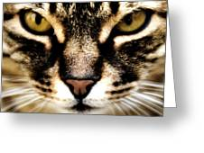 Close Up Shot Of A Cat Greeting Card by Fabrizio Troiani