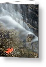 Closeup Maple Leaf And Decew Falls, St Greeting Card by Darwin Wiggett