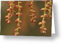 Closeup Of Pollen Tendrils Hanging Greeting Card by Phil Schermeister
