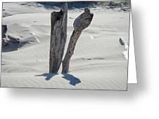 Coastal Driftwood Art Prints Ocean Shore Sand Beach Greeting Card by Baslee Troutman
