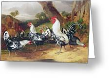 Cockerels In A Landscape Greeting Card by William Joseph Shayer