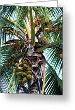 Coconut Palm Inflorescence Greeting Card by Karon Melillo DeVega