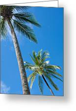 Coconuts  Greeting Card by Atiketta Sangasaeng