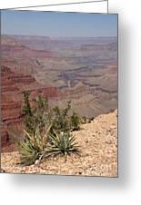 Colorado River Grand Canyon National Park Arizona Usa Greeting Card by Audrey Campion