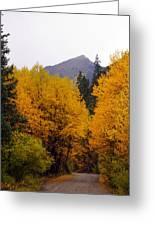 Colorado Road Greeting Card by Marty Koch