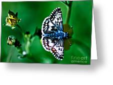 Colorful Butterfly Greeting Card by Mitch Shindelbower