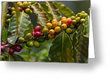 Colorful Coffee Beans Greeting Card by Craig Lapsley