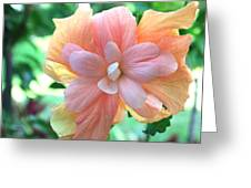 Colorful Hibiscus Greeting Card by Karen Nicholson