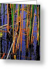 Colorful Reeds Greeting Card by Beth Akerman