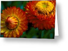 Colors Of Fall Greeting Card by Kathy Yates