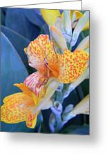Colors Of The Canna Lily Greeting Card by Warren Thompson