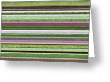 Comfortable Stripes lV Greeting Card by Michelle Calkins