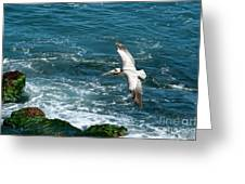 Coming In Greeting Card by Sandra Bronstein
