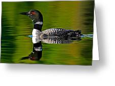 Common Loon Greeting Card by Jim Cumming