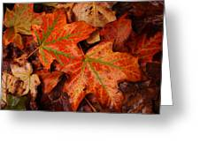 Complementary Contrast Leaves Greeting Card by Matthew Green