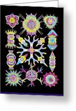 Computer Art Of Radiolarians (from Ernst Haeckel) Greeting Card by Mehau Kulyk