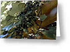 Concord Grapes Greeting Card by Heather Grow