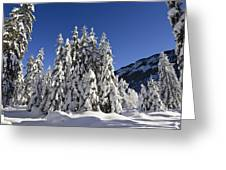 Coniferous Forest In Winter Greeting Card by Konrad Wothe