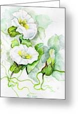 Convolvulus Greeting Card by Angelina Whittaker Cook