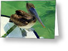 Cool Footed Pelican Greeting Card by Karen Wiles