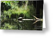Cooter On A Log Greeting Card by Theresa Willingham