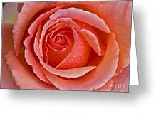 Coral Bloom Greeting Card by Chuck Flewelling