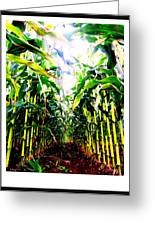 Corn Greeting Card by Kara Ray