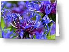 Cornflower Color Greeting Card by Byron Varvarigos