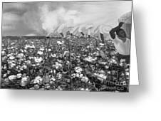 Cotton Field Greeting Card by Belinda Threeths