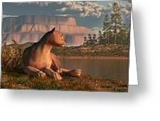 Cougar At Evening Greeting Card by Daniel Eskridge