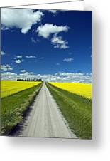 Country Road With Blooming Canola Greeting Card by Dave Reede