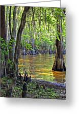 Cove At Caddo Lake Greeting Card by Gayle Johnson