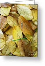 Covering The Green Greeting Card by Trish Hale