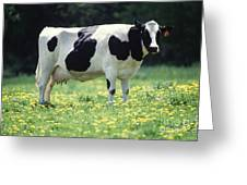 Cow In Pasture Greeting Card by Science Source