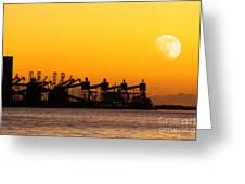 Cranes At Sunset Greeting Card by Carlos Caetano