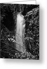 Cranny Falls Waterfall Carnlough County Antrim Northern Ireland Uk Greeting Card by Joe Fox