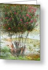 Crape Myrtle Greeting Card by Debbie Portwood