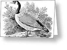 Cravat Goose Greeting Card by Granger