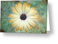 Cream Coloured Daisy Greeting Card by Chris Thaxter